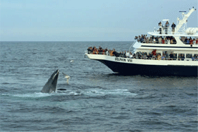 whalepicb